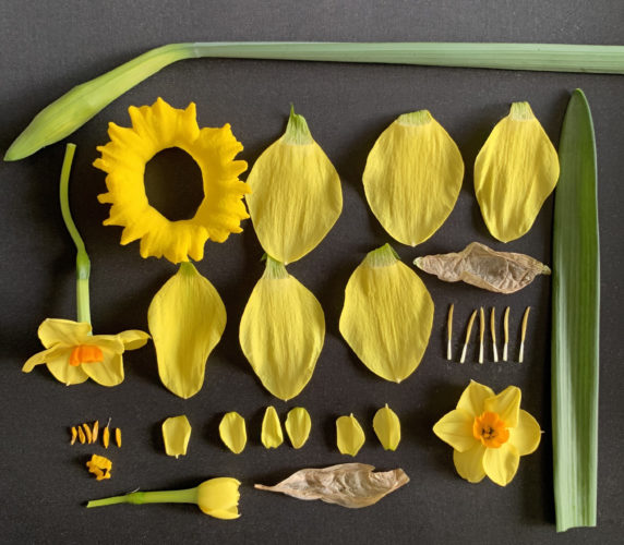 """<img alt=""""study of a British Daffodil"""">"""