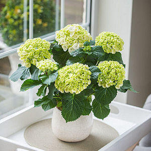 gift_plants_shop_category