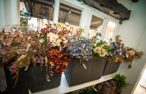 Moutan Flowers Farnham